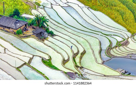 Rice fields on terraced. Fields are prepared for planting rice. Ban Phung. Ha Giang. Huyen Hoang Su Phi. Northern Vietnam