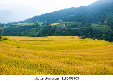 Rice fields on terraced. Fields are prepared for planting rice. Nam Dan, Huyen Xin Man, Ha Giang Province. Northern Vietnam