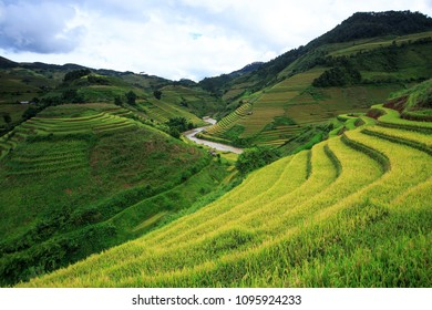 Rice fields on terraced in rainny season at Mu Cang Chai, Yen Bai, Vietnam. Rice fields prepare for transplant at Northwest Vietnam.