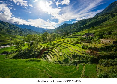 Rice fields on terraced in rainny season at SAPA, Lao Cai, Vietnam. Rice fields prepare for transplant at Northwest Vietnam