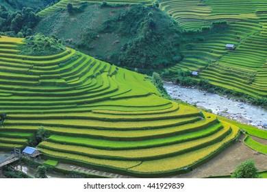 Rice fields on terraced in rainny season at Mu Cang Chai, Yen Bai, Vietnam. Rice fields prepare for transplant at Northwest Vietnam