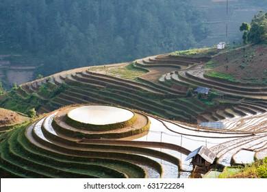 Rice fields on terraced in rainny seasont at TU LE Village, Yen Bai, Vietnam