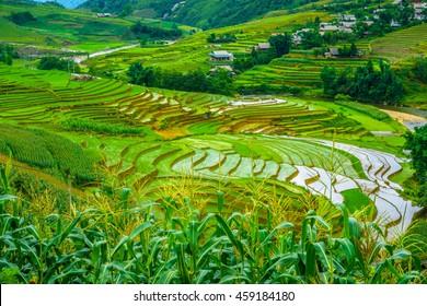 Rice fields on terraced in rainy season of Sapa city at Northwest Vietnam