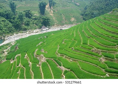 Rice fields on terraced of sapa Vietnam landscapes.