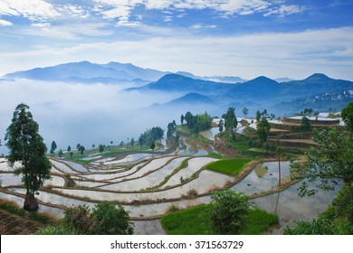 Rice fields on terraced in sunrise, China