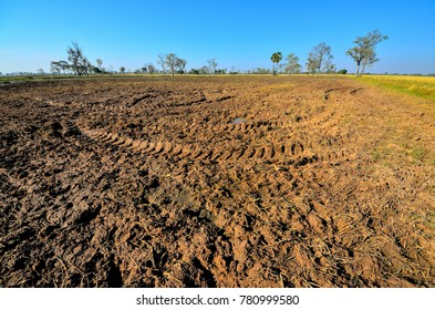 Rice fields are plowed for the next planting. Background is blue sky and tree.