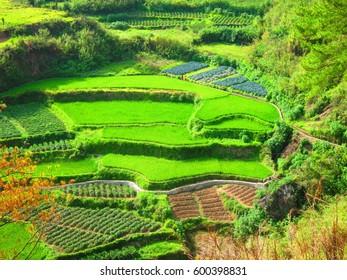 Rice fields of Sagada, Philippines