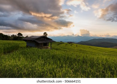 Rice fields in a sunset sky at Bong-Pieng village, Chiangmai, northern of Thailand