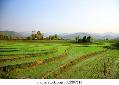Rice fields in terraced with beautiful curves on high mountain in loans prabang, laos.