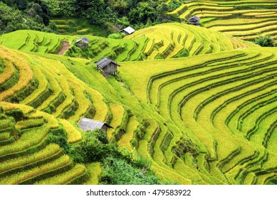 Rice fields terraced and small Village in vietnam