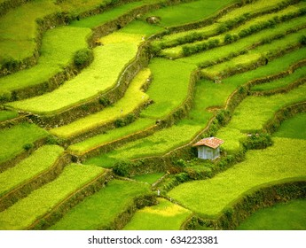 Rice fields Terraces, Phillipines