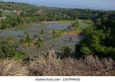 rice fields that are ready to be planted. Indonesia is a predominantly agriculture country, rice fields or paddy fields are often found here.