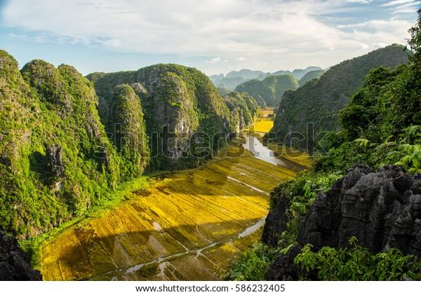 Die Reisfelder in Trang Ein Landschaftskomplex