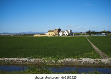 Rice fields with typical houses of Valencia