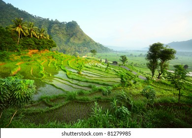 Rice fields in a valley at morning light. Bali island