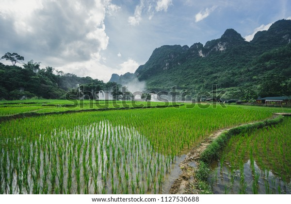 rice fields and waterfall