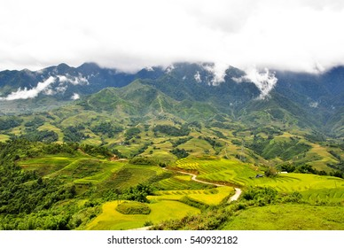 rice filed and mountain background