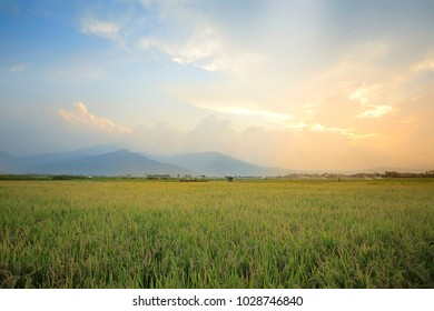 Rice Filed,and Mountain View With Sunset. at Ambarawa, Central Java. Indonesia.