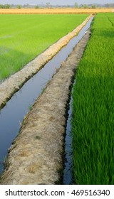 rice irrigation with small canal and soil levee
