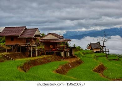 Pa Bong Piang Rice Terraces at Pa Bong Piang village in Mae Cham, Chiangmai, Thailand.
