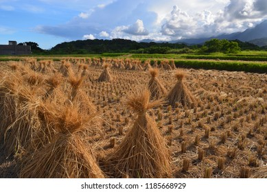 The rice paddies had been harvested, and a few bundles of straw were placed.