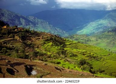 Rice paddies as layers of terraced fields on steep hillsides,   Nepal Himalaya, Asia