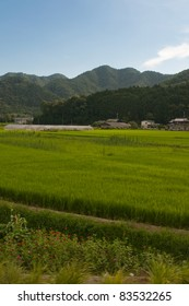 Rice paddies with a mountain in the background, near Kyoto, Japan.