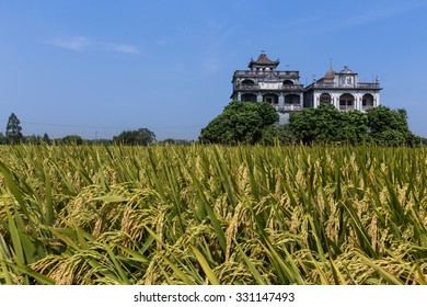 Rice paddy and Diaolou of the World Heritage Site in Kaiping, Guangdong, China