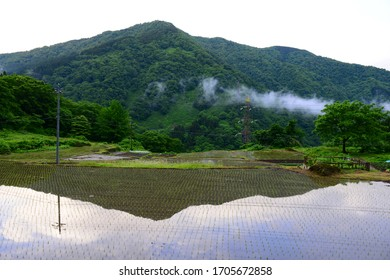 Rice paddy field in the mountains of Japan