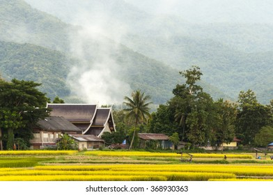 Rice paddy and Thai style house ,Nan,Thailand.