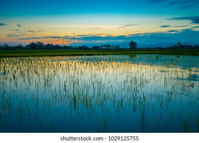 Rice plantation ground before planing rice tree in golden hour time before sunset