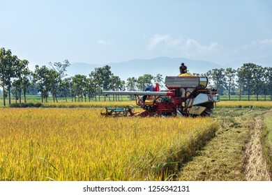 Rice reaping machine on working in yellow rice field with nature landscape view