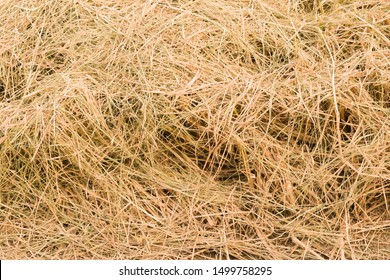 rice straw after passing of harvest car