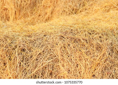 Rice straw background texture