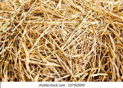 Rice straw background, Thailand.
