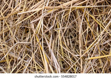 Rice straw or chaff background texture.