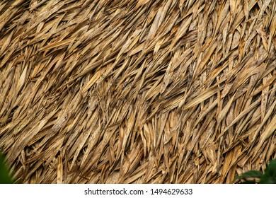 Rice Straw Pattern rice field background