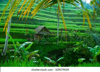 Rice tarrace in mountains on Bali, Indonesia.
