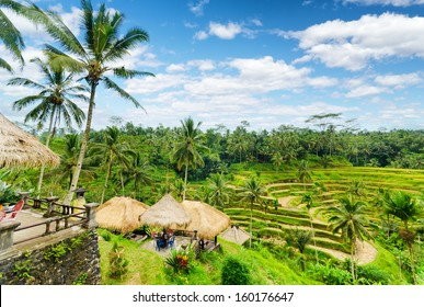 Rice terrace of Bali Island, Indonesia.