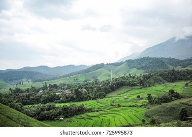 Rice terrace, Chiang Mai, Thailand