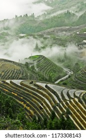 Rice Terrace in China Misty autumn landscape with rice terraces. China, Yangshuo, Longsheng Rice Terraces.