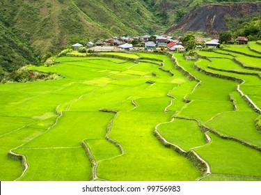 Rice terrace in Cordillera mountains, Philippines