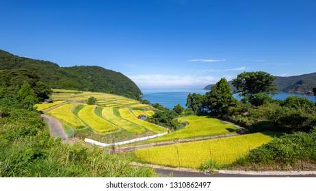 Rice terrace in early autumn, Fukui prefecture, japan