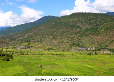 Rice terrace in the fertile Punakha Valley, and with the famous Chhimi Lhakhang, the Fertility Temple, in the far sight, Punakha Valley, Bhutan