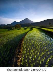 Rice terrace fields in Trawas, East Java Indonesia. - Shutterstock ID 1889304970