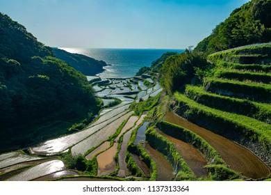 Rice terrace of Hamanoura(Saga prefecture,JAPAN)