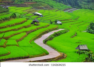 rice terrace at The Imperial MaeRoyal Project, An agricultural tourist attraction during the rainy season in Thailand, Mae La Noi Located in Mae La Noi,  Huay Hom district. Mae Hong Son, thailand,blur