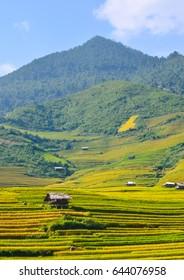 rice terrace in mucangchai vietnam