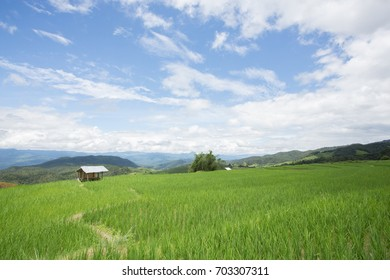 rice terrace in the northern of thailand