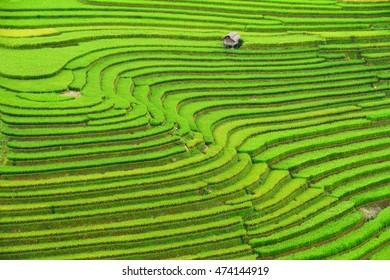 Rice terrace on during sunrise,Vietnam